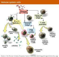 System Imun